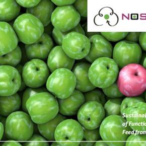 Mangimi alimentari dai rifiuti alimentari, ecco il progetto Noshan finanziato dall'Ue