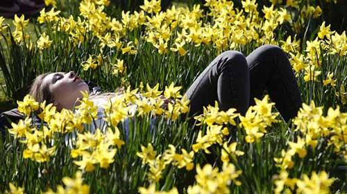 relax fra i fiori
