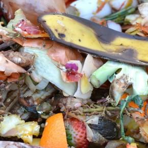Il compost come modello di economia circolare