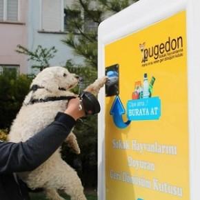 Pugedon: imballaggi in cambio di crocchette per cani e gatti randagi
