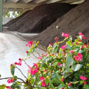 Decalogo per riciclare i rifiuti organici e utilizzare il compost