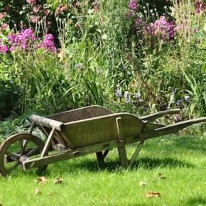 Giardino e orto senza veleni: eliminiamo i pesticidi dagli spazi verdi domestici