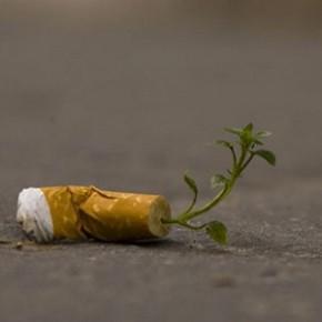 Sigarette che germogliano e gomme da masticare che diventano polvere. La nuova lotta ai rifiuti speciali
