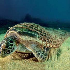 Dalle reti da pesca agli oggetti di design e non solo:obiettivo la salvaguardia dei mari