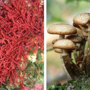 Polistirolo addio: alghe e funghi per nuovi imballaggi sostenibili
