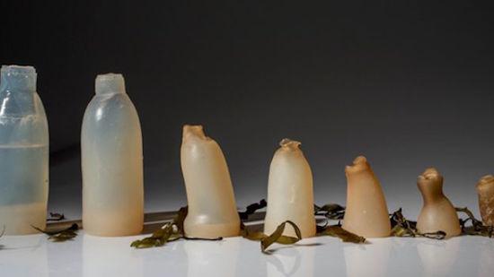 bottiglia-alghe-rosse