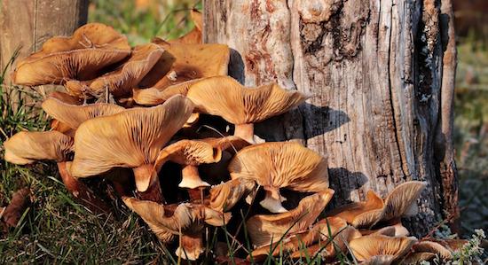 funghi-albero