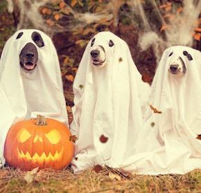 Riciclo creativo ad Halloween: decorazioni e costumi con materiale di recupero