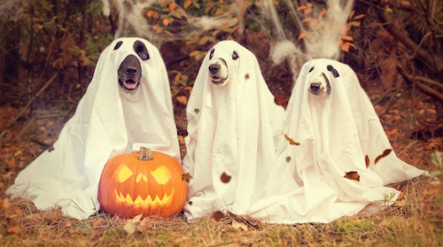 halloween fantasmi lenzuolo