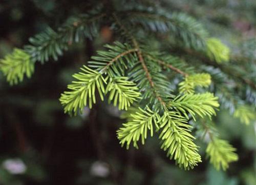 riuso-albero-natale