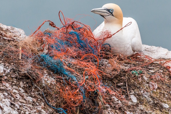 reti da oesca plastica